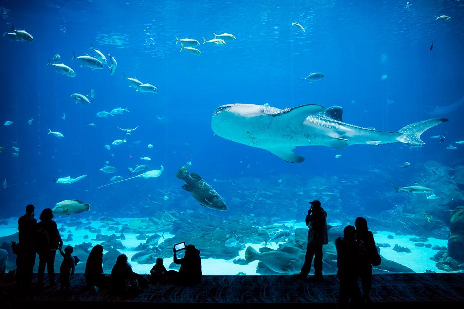 akvārijs vaļhaizivs niršana rajas mantas džordžija atlanta lielākais daba zemūdens daivings sapnis