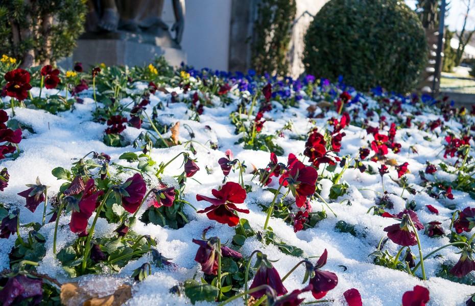 atraitnites florina katedrale ziema lihtensteina vaduca ziemassvetki