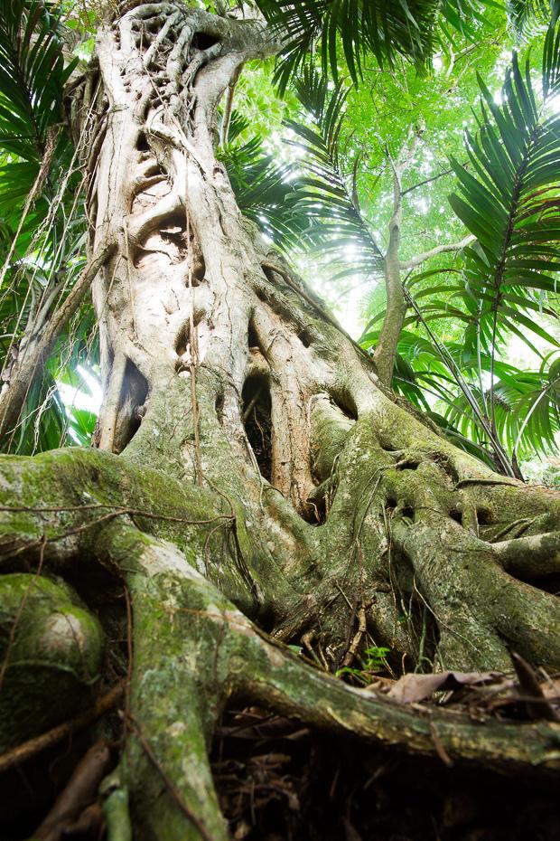 coco de mer palmas skaisti pasaule dzungli tropisks klimats silts ziema sauloties seiselas mezs daba neskarts pargajiens veseligs