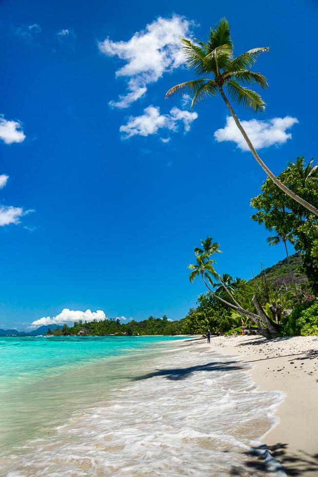 pludmale udens daivings snorkelesana serfosana kaitosana palmas dzungli siluete seiseli indijas okeans jura salas peldesanas gimene kazas paradize medusmenesis