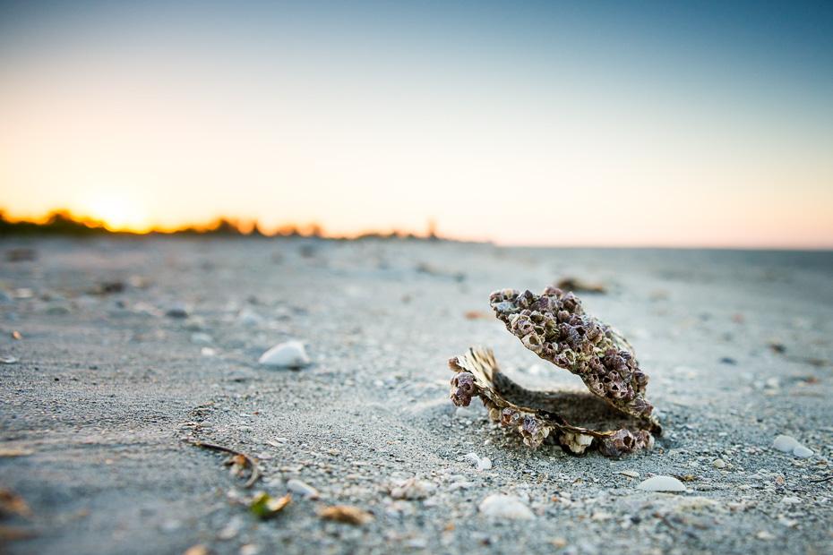 sanibel florida asv amerika gliemezvaki shelling lasit brivdienas sala captiva
