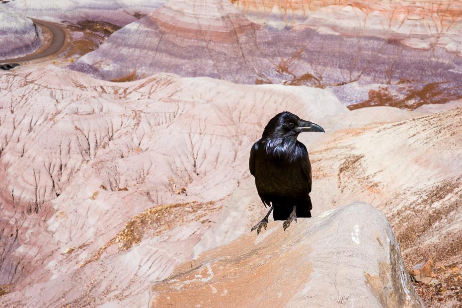 krauklis petrified forest nacionālais parks pārakmeņojušies koki amerika arizona auto