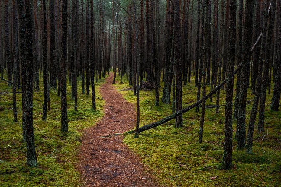 carnikava latvija mežs