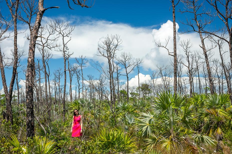 floridakīza saulains karību amerika florida asv kīvesta