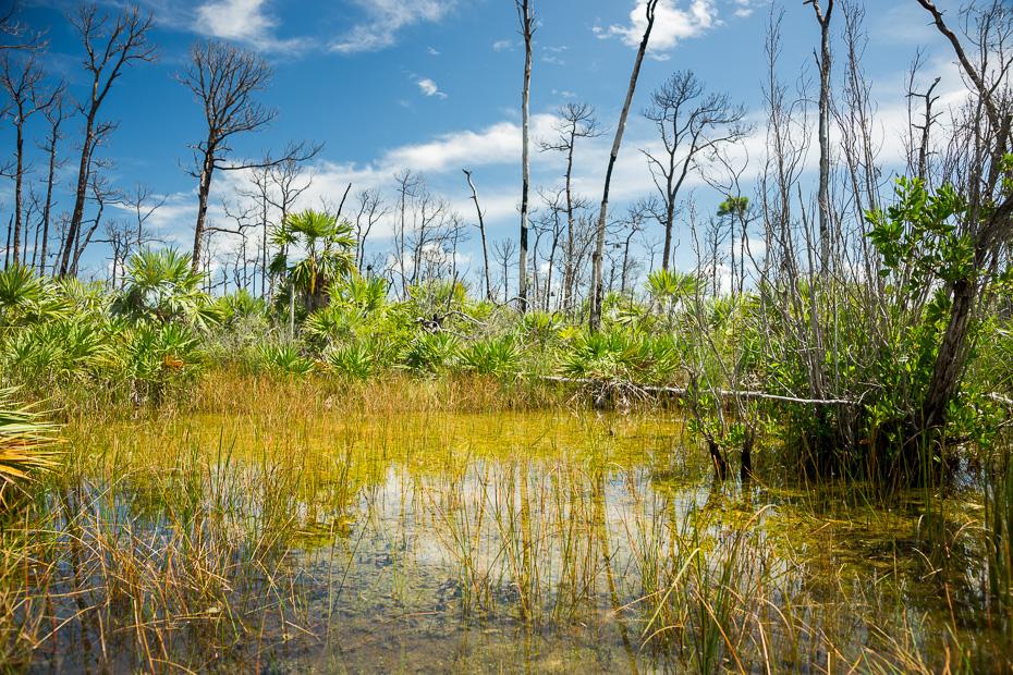 florida floridakīza asv amerika tropiskais klimats