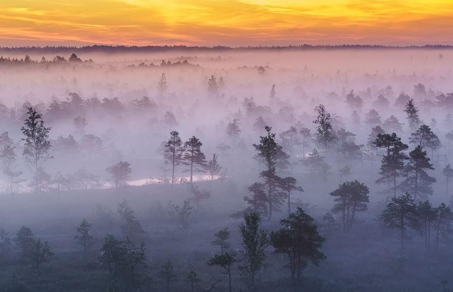 maģisks rīts ķemeru nacionālais parks purva laipa