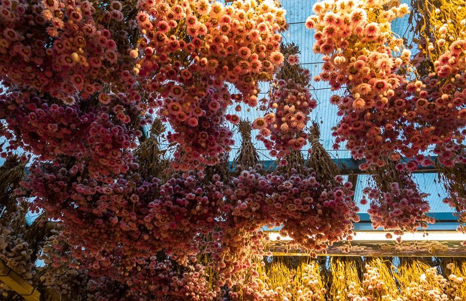 ziedu tirgus amsterdama