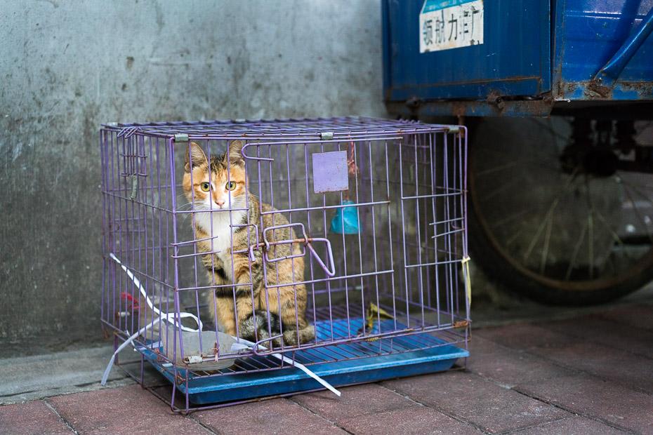 kaķis kārtiņā guandžou tirgū