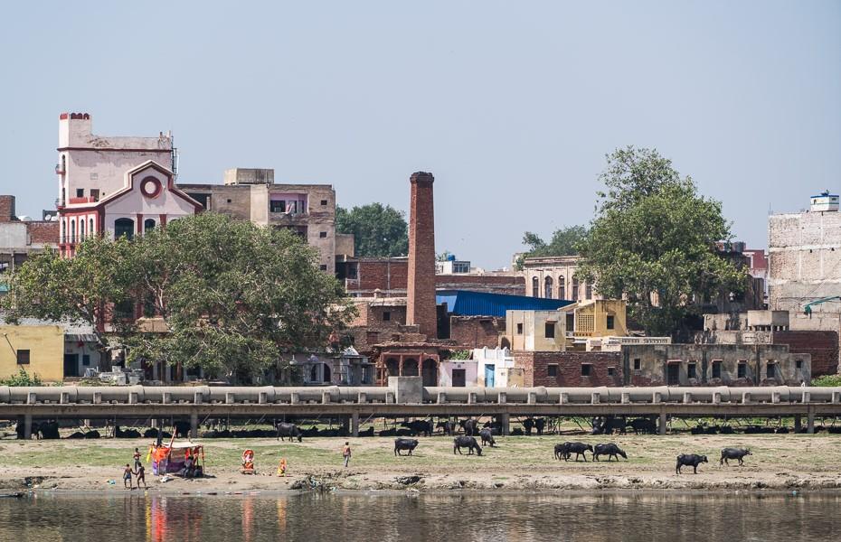 ūdensbifeļi upe indija āgra