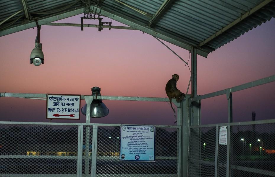 dzelzceļa stacijas mērkaķi indijā