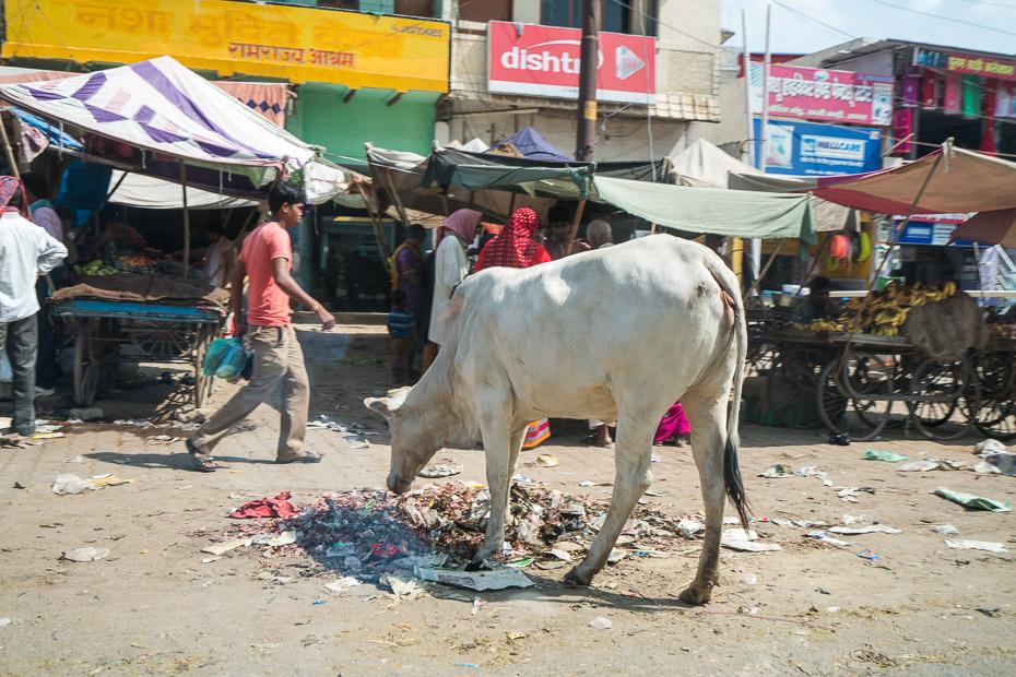 govis indija atkritumi
