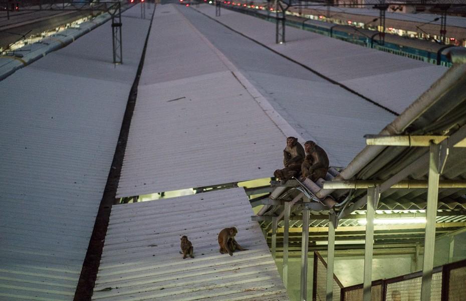 indija mērkaķi dzelzceļa stacijā