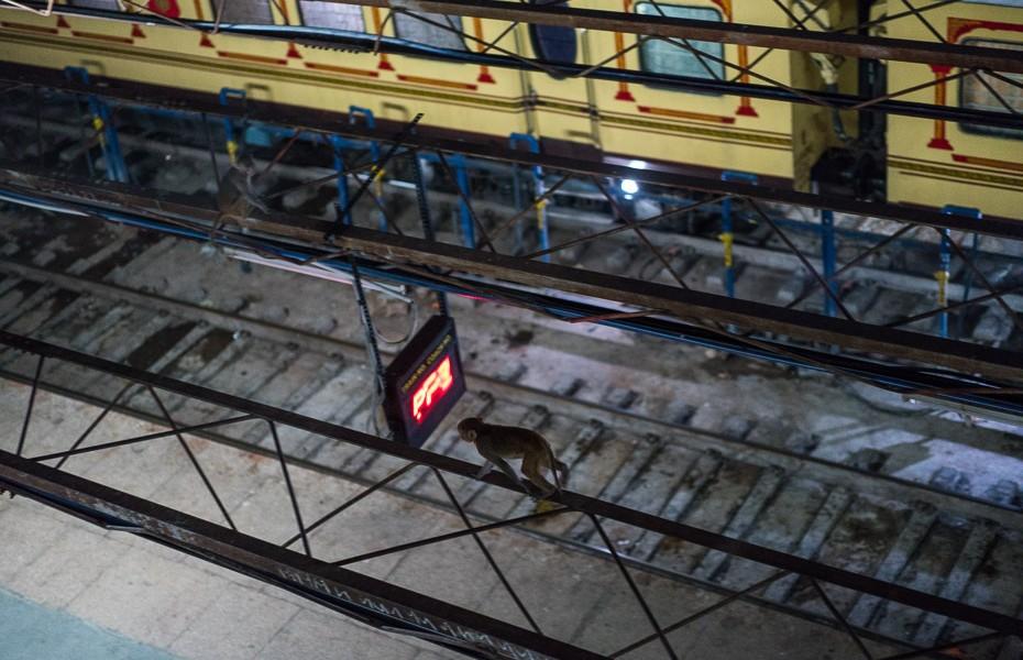 mērkaķi indija dzelzceļa stacija