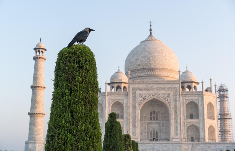 tadžmahāls indija putni