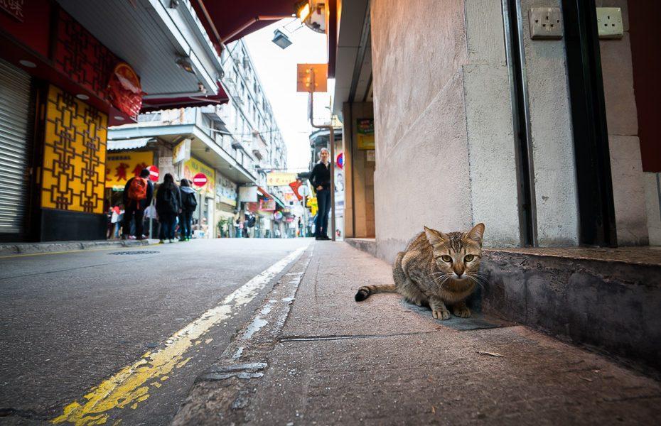 ielu kaķi makao