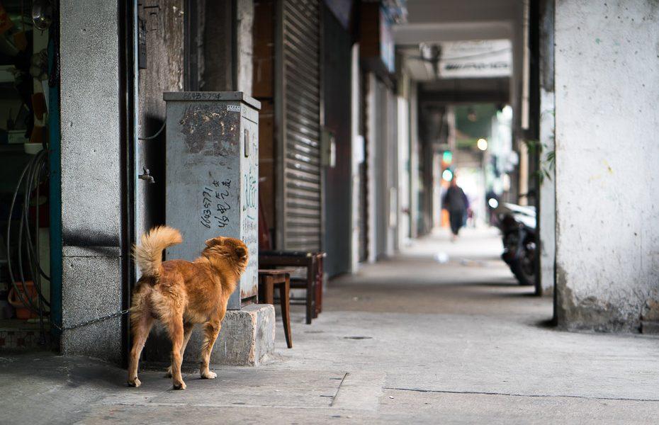 suns makao ielās