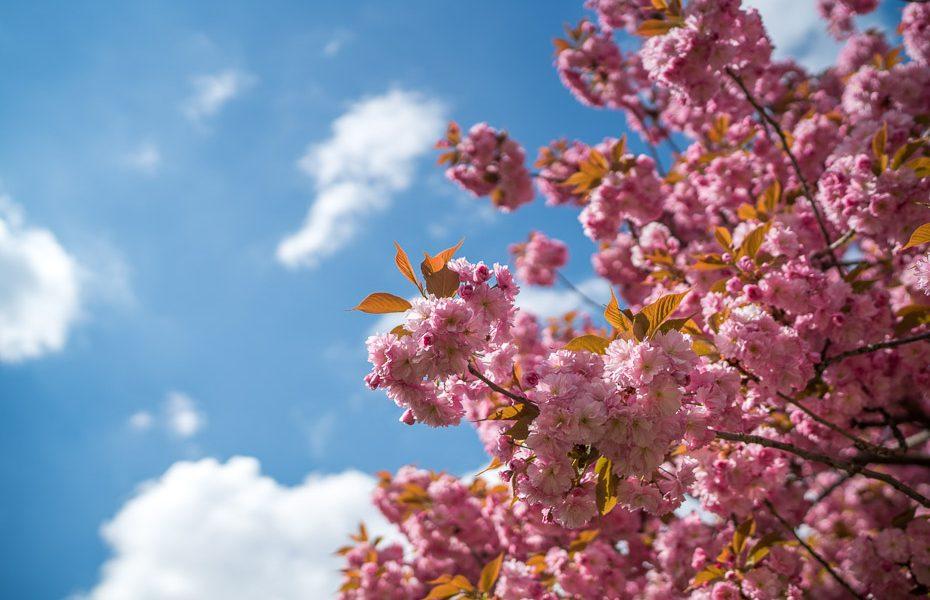10 fotogrāfijas, kas iedvesmos apceļot Parīzi pavasarī
