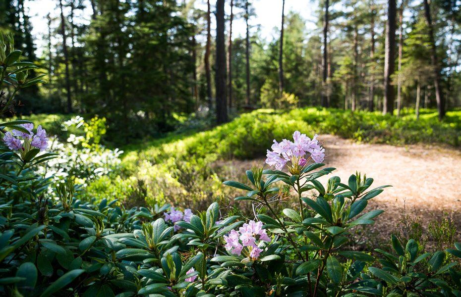 latvijas dabas taka