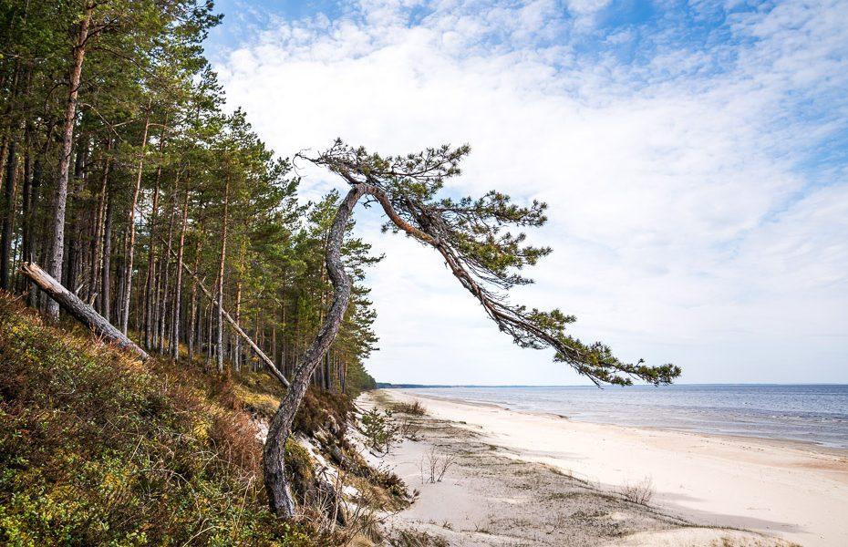 pludmale jūrmala lāčupītes dendrārijs