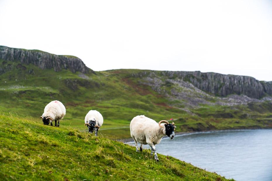 Aitu ganības Eiropā