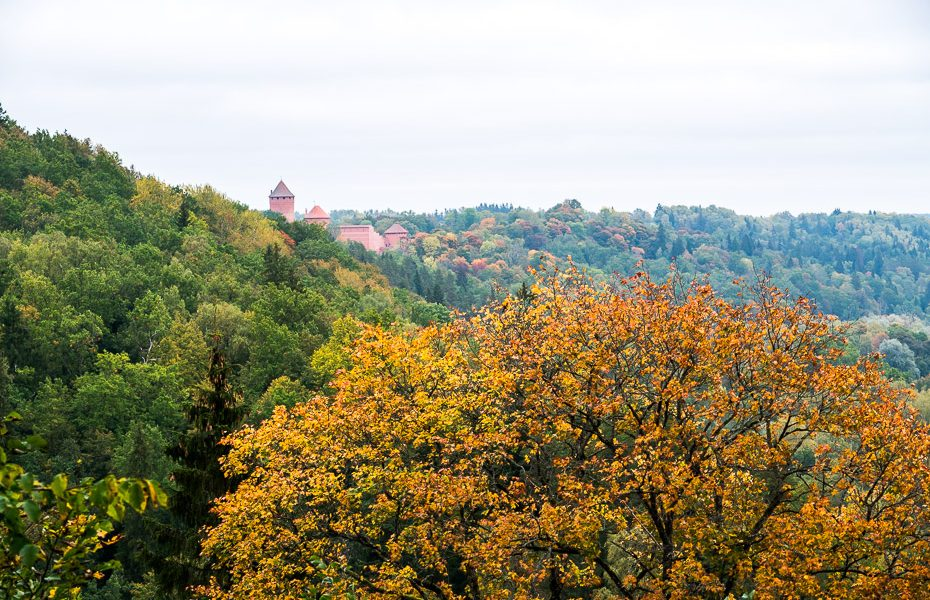 Turaidas pils Sigulda zelta rudens lapas