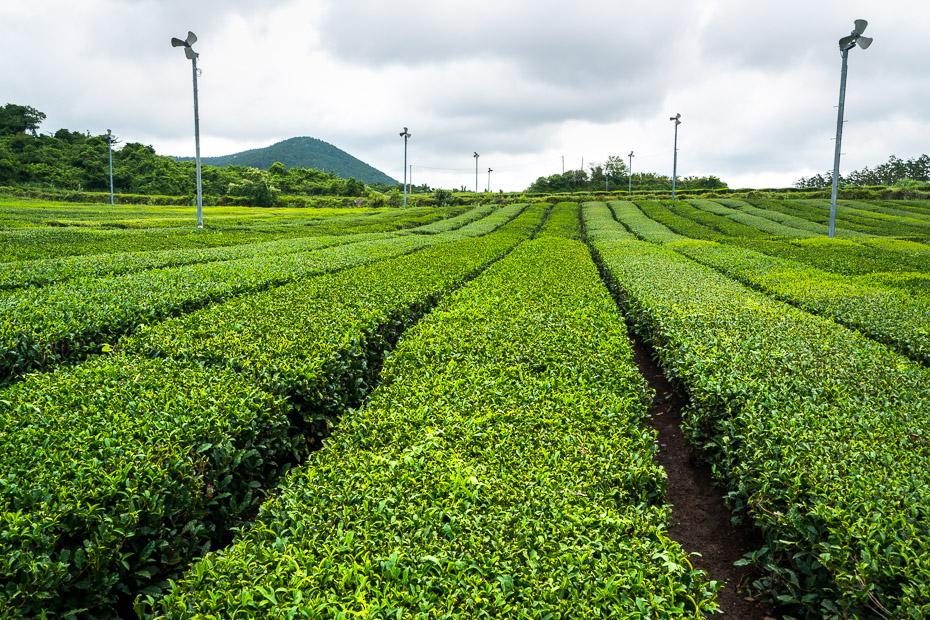 Lauksaimniecība Āzijā