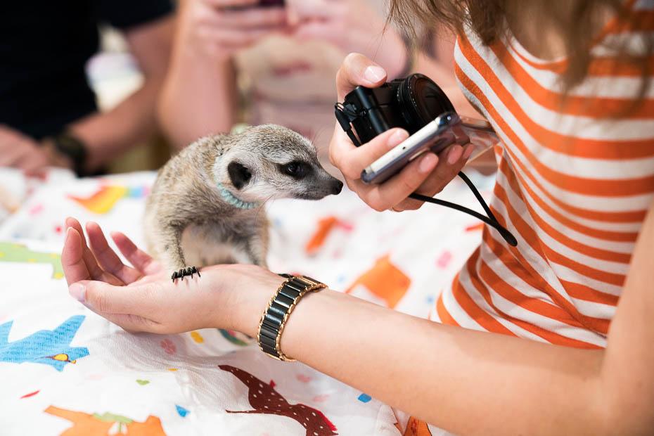 mīlīgākie dzīvnieki pasaulē
