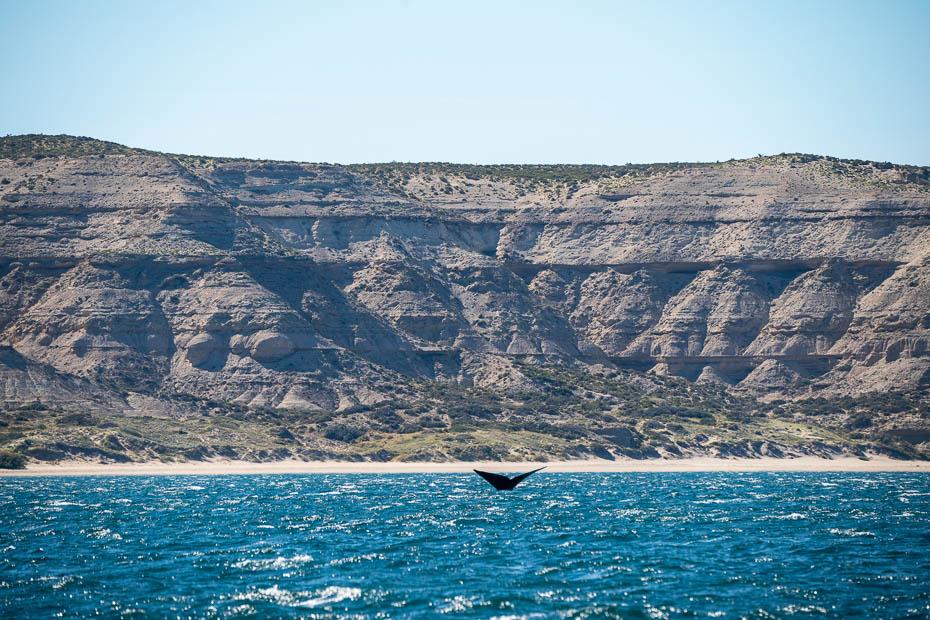 kur redzēt vaļus brīvā dabā