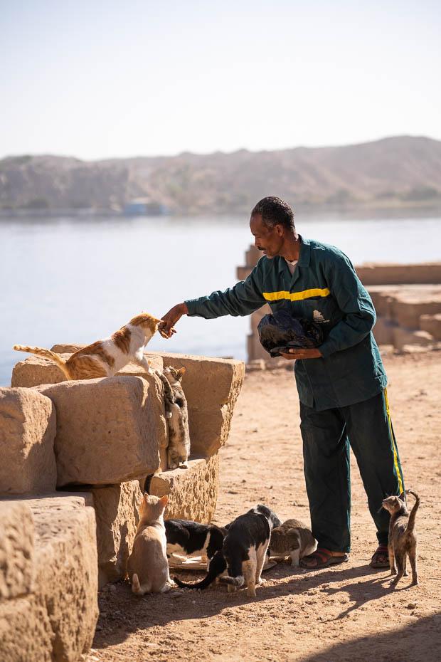 Kaķu barotājs Ēģiptē