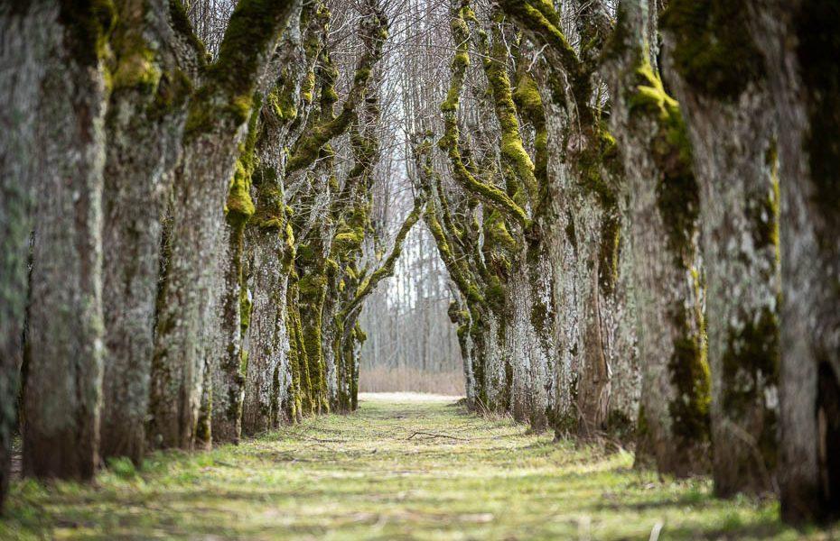 10 dabas takas un objekti Latvijā, ko apskatīties sociālās distancēšanas laikā