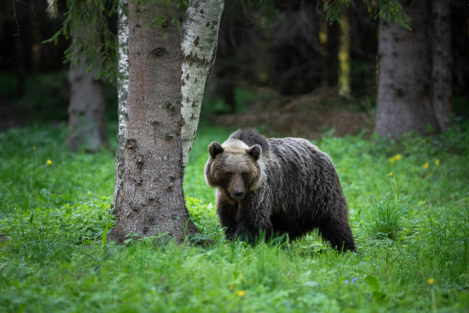 Lāči brīvā dabā neparastas vietas Baltijā