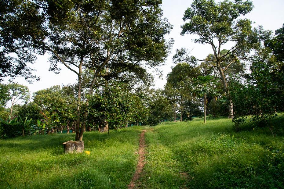 durianu ferma