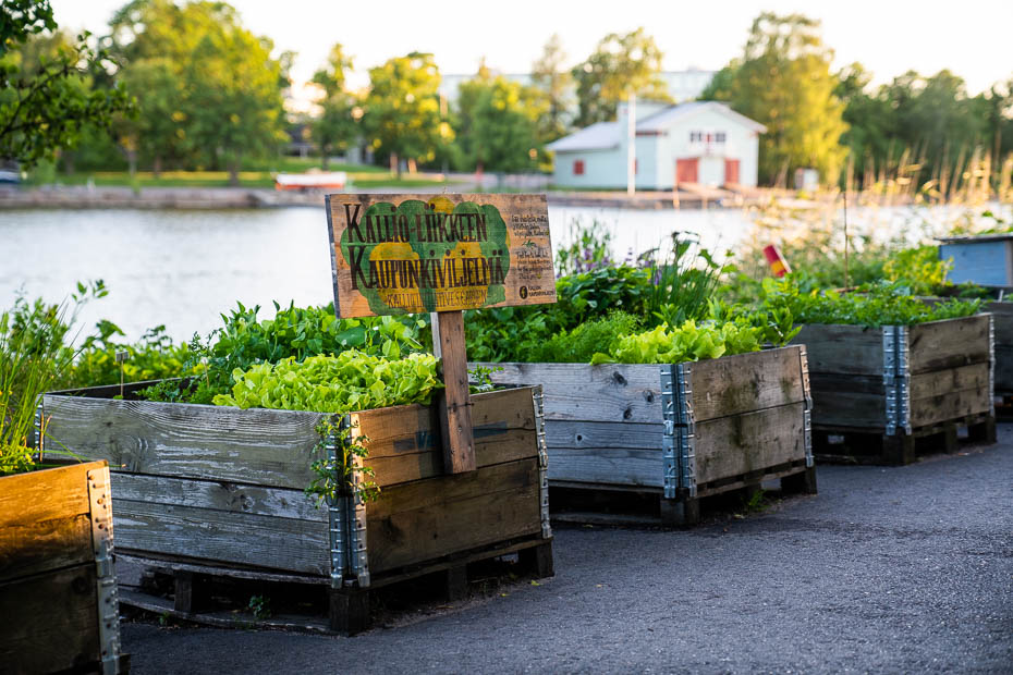 kooperatīvie dārziņi Helsinkos