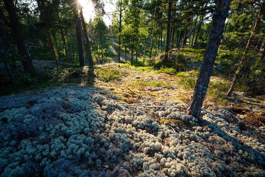 Virvik dabas takas Somijā