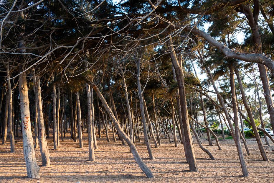Montazas pils parks Aleksandrijā