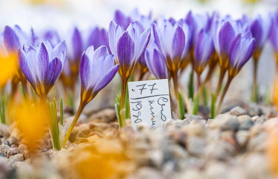 25 skaistākās pastaigu un apskates vietas Latvijā pavasarī