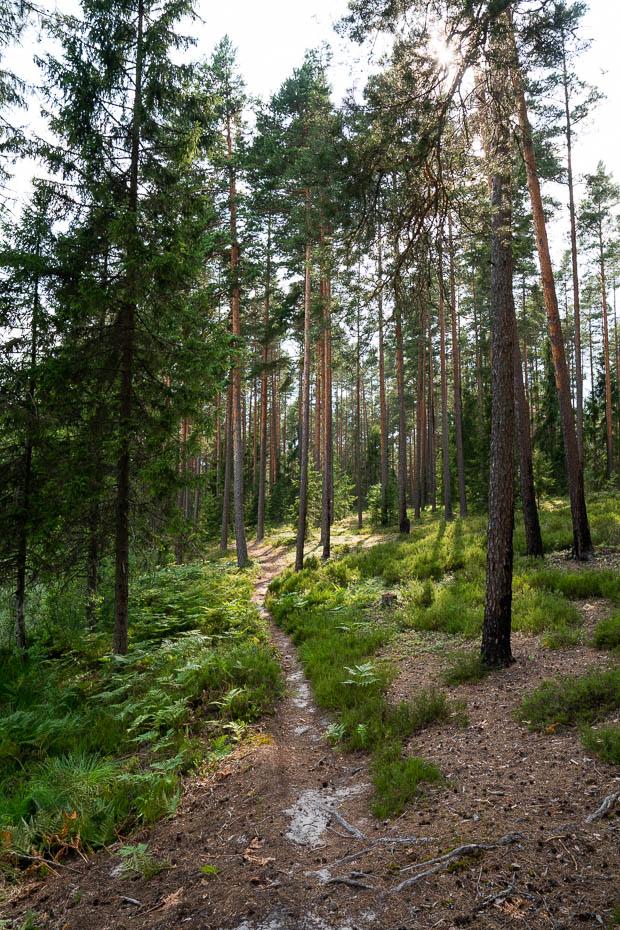 Skaistākās meža takas Latvijā