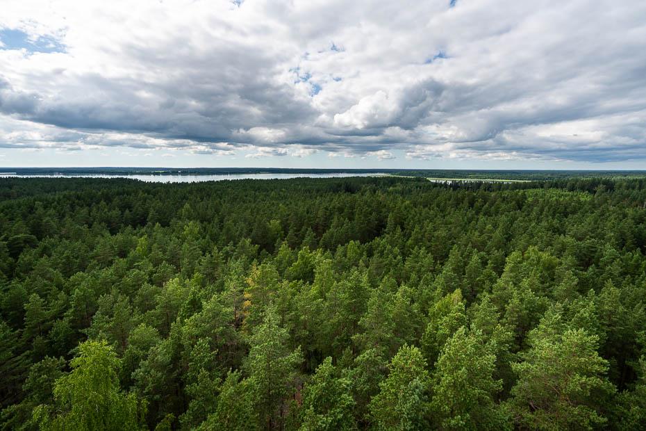 Usmas ezera meža masīvi