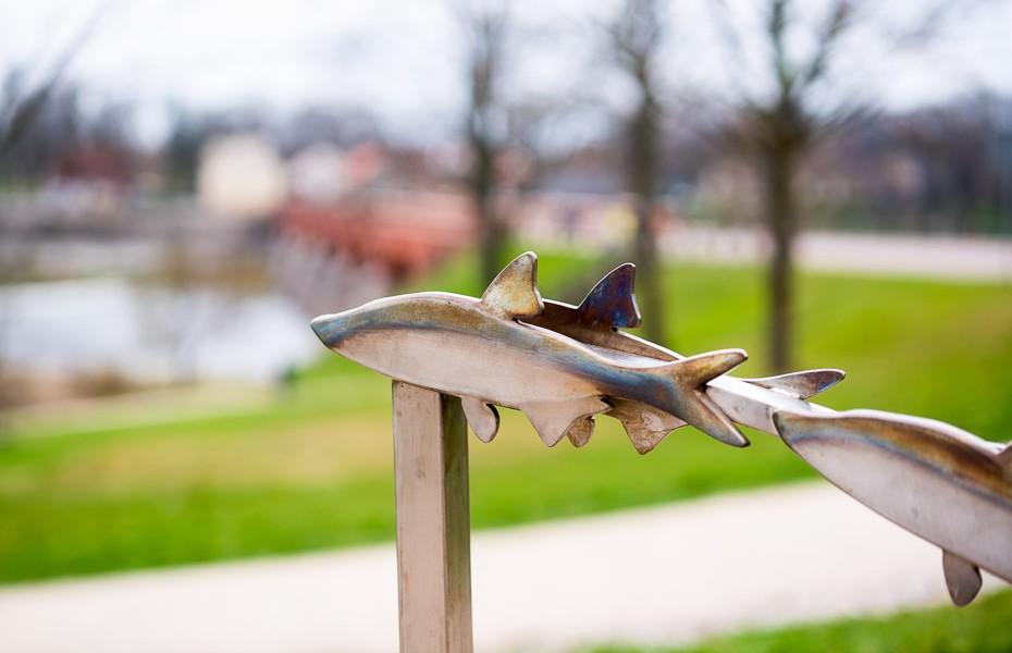 lidojošās zivis