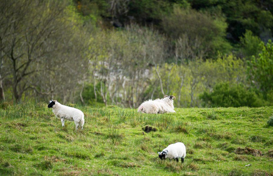 aitas īrijā